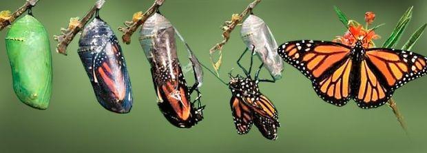 lagarta-e-borboleta-5959ad3654079
